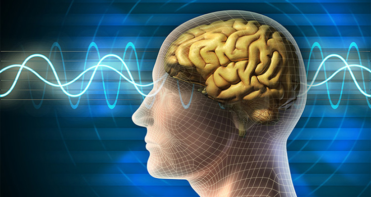 human brain waves addicts