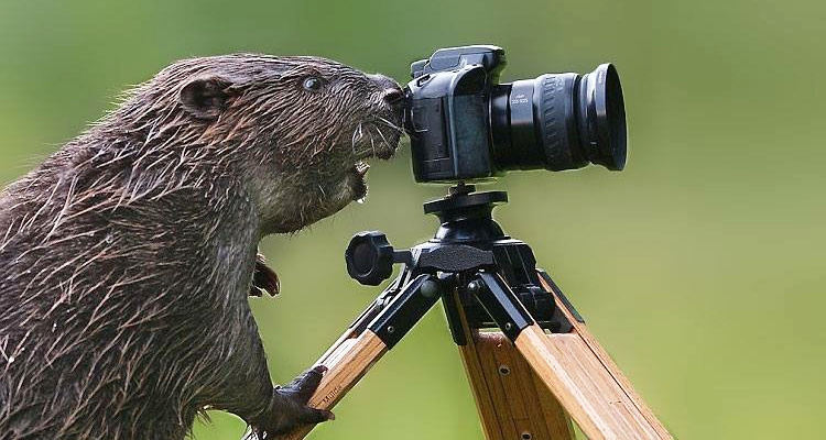 Beaver Buying Your First DSLR Camera